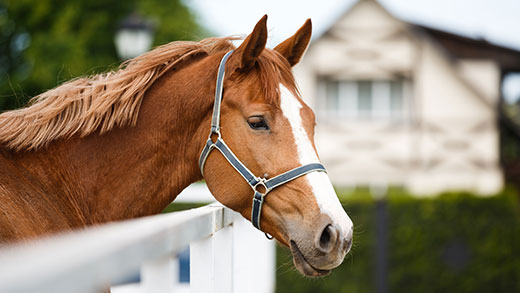 Affordable Horse Barns